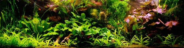 Dekorativt akvarium Arkivbilder