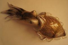 Dekorativt arbete i form av marin- djur - tioarmad bläckfisk Arkivfoton