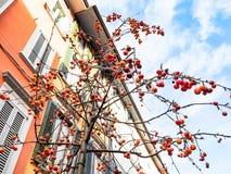 Dekorativt crabappleträd på gatan i Bergam arkivbild