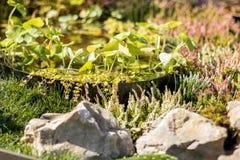 Dekorativt damm i trädgården, slut upp arkivfoto