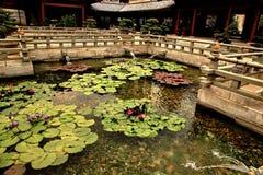 Dekorativt damm med lotusblomma i Hong Kong Fotografering för Bildbyråer