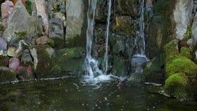 Dekorativt damm med springbrunnen och den guld- fisken i trädgård stock video