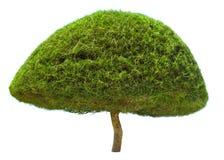 Dekorativt format träd Royaltyfri Bild