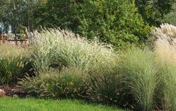 dekorativt gräs royaltyfri bild