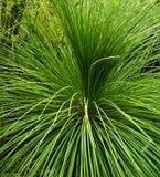 dekorativt gräs Arkivbilder
