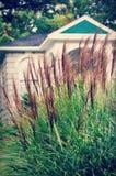 dekorativt gräs royaltyfria bilder