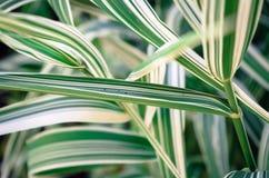 Dekorativt gräs arkivfoto