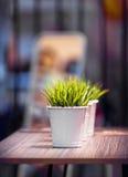 Dekorativt härligt grönt gräs i hinken under ljuset Royaltyfria Foton