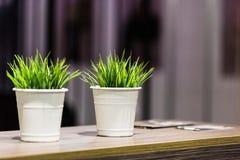 Dekorativt härligt grönt gräs i metallhinken arkivfoton