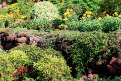 Dekorativt i trädgården Arkivfoton