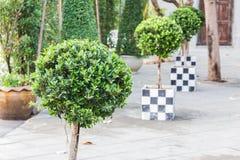 dekorativt infall formad tree arkivfoto