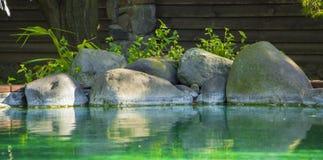 Dekorativt koidamm i en trädgård Royaltyfri Fotografi