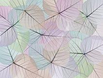 dekorativt leafskelett för bakgrund Arkivbild