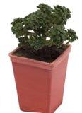 dekorativt little växt Royaltyfria Bilder