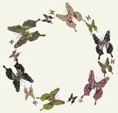 dekorativt ramG för härliga fjärilar Royaltyfri Bild