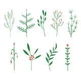 Dekorativt ris, borsteväxter royaltyfri illustrationer