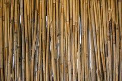 Dekorativt staket av många vassstammar arkivfoton