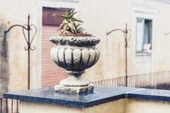 Dekorativt stena krukan för växter på terrassen av en historisk byggnad i Catania, Sicilien, Italien, regnig dag fotografering för bildbyråer