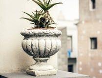 Dekorativt stena krukan f?r v?xter p? terrassen av en historisk byggnad i Catania, Sicilien, Italien arkivbilder