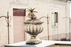 Dekorativt stena krukan f?r v?xter p? terrassen av en historisk byggnad i Catania, Sicilien, Italien royaltyfri bild