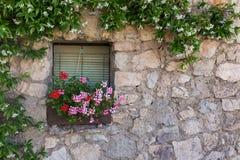 Dekorativt tappningfönster med färgrika växter i krukor Royaltyfri Foto