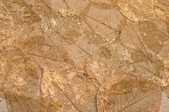 Dekorativt torkat skelett- ark för blad Arkivfoto