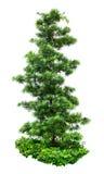 Dekorativt träd Arkivbild