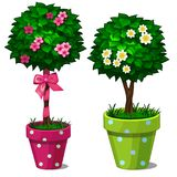 Dekorativt träd för bonsai två med blommor royaltyfri illustrationer