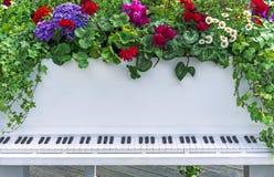 Dekorativt vitt piano med att växa för blommor ut ur den Ljusa blommor på ett vitt piano royaltyfria foton