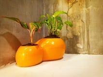 Dekorera av den orange blomkrukan royaltyfri foto