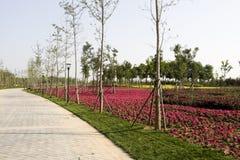 dekorera blommor Arkivbild