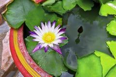 dekorera det trädgårds- damm för fritidlooklotusblomma Arkivfoto