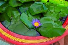 dekorera det trädgårds- damm för fritidlooklotusblomma Royaltyfri Fotografi
