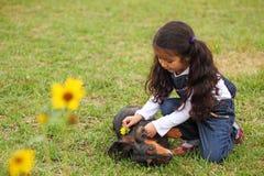 Dekorera hunden Fotografering för Bildbyråer