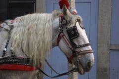 dekorerad häst royaltyfri foto