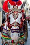 Dekorerad häst Royaltyfri Fotografi