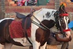 dekorerad häst i ståta Arkivfoton
