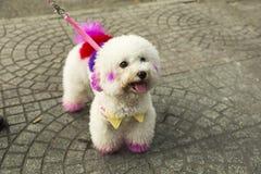 Dekorerad hund royaltyfria bilder