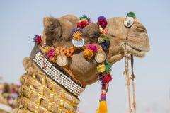 Dekorerad kamel på ökenfestivalen i Jaisalmer, Rajasthan, Indien royaltyfria foton