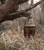 Dekorerad lykta för stearinljus på det gamla trädet i skogen royaltyfria foton