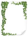 Dekorerad murgröna för vitbok ark Fotografering för Bildbyråer