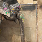 Dekorerade elefanter i Jaleb Chowk i Amber Fort i Jaipur, Indi Royaltyfri Fotografi