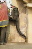 Dekorerade elefanter i Jaleb Chowk i Amber Fort i Jaipur, Indi Royaltyfri Bild
