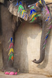 Dekorerade elefanter i Jaleb Chowk i Amber Fort i Jaipur, Indi Royaltyfria Bilder