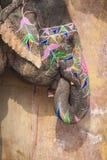 Dekorerade elefanter i Jaleb Chowk i Amber Fort i Jaipur, Indi Arkivfoton