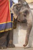 Dekorerade elefanter i Jaleb Chowk i Amber Fort i Jaipur, Indi Royaltyfri Foto
