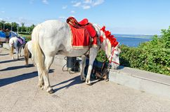 Dekorerade hästar äger rum på semester Fotografering för Bildbyråer