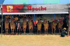 Dekorerade tjurar på det Madura tjurloppet, Indonesien Royaltyfria Foton