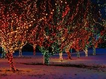 Dekorerade utomhus- julgranar Arkivfoton
