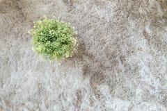 Dekorerar den konstgjorda växten för closeupen i krukan för på texturerad bakgrund för grå färger matta i bästa sikt Arkivfoton